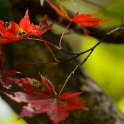 秋の始まり 小谷村