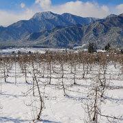 松川村 リンゴ園と有明山の冬