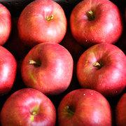 大町市 選果を待つリンゴ