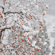 深雪の小谷村中土