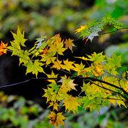 白馬松川渓谷の秋