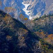 雪渓と岳樺紅葉