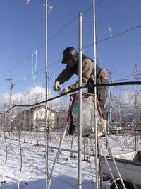 小澤園の冬の作業風景です