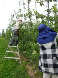 摘果最中の小澤果樹園