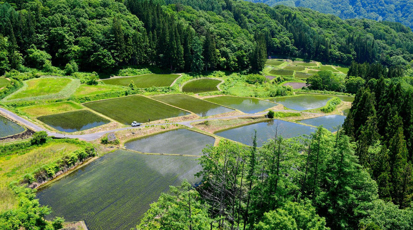 スライド106 小谷村栂池の棚田