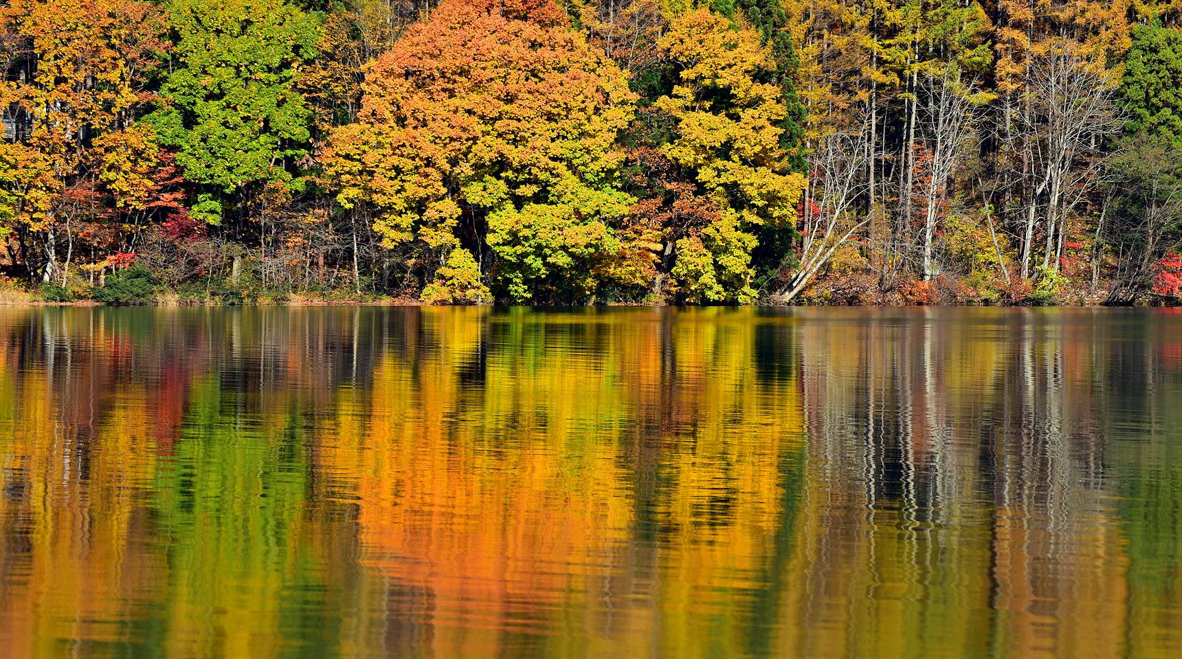 スライド126 湖畔の紅葉 青木湖