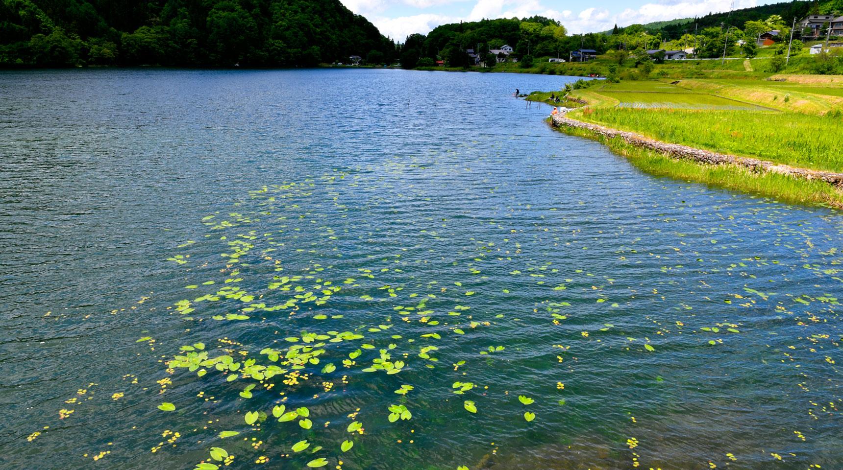 スライド158 睡蓮浮かぶ中綱湖